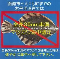 35cm未満は海中に還元!