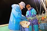 マツカワ刺網漁